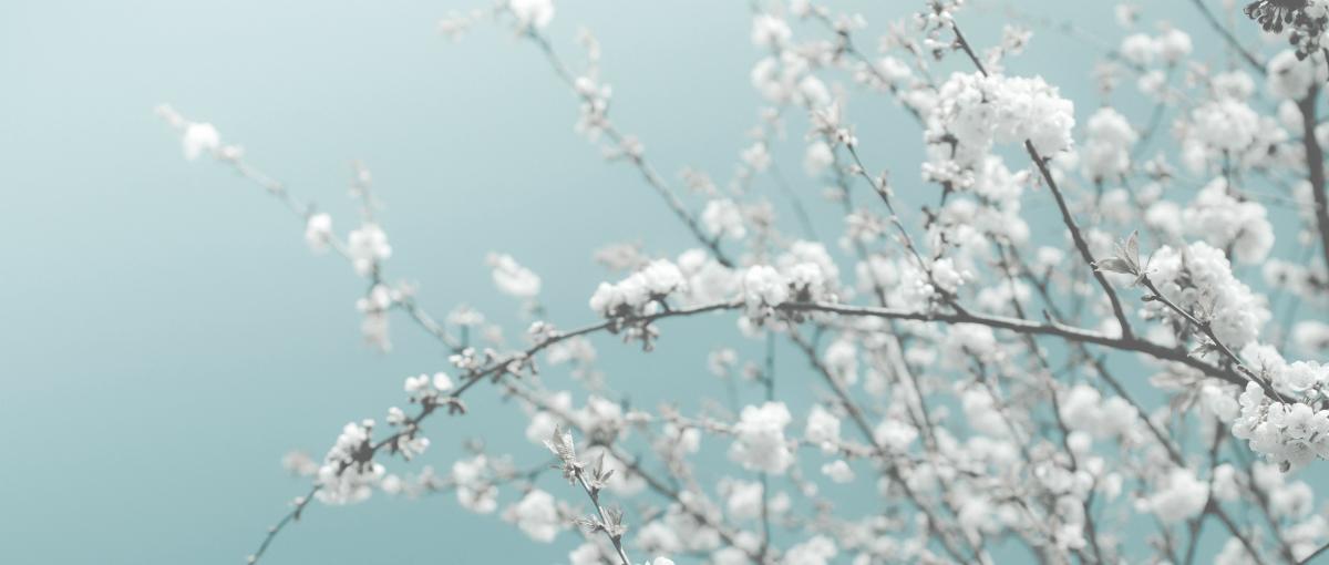 Asian Blossom